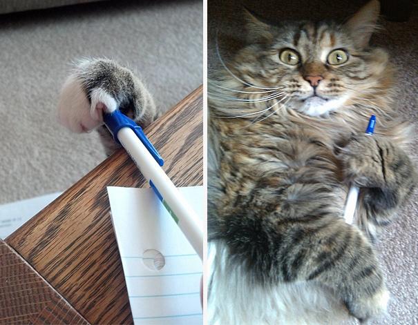 Коты, которых поймали на горячем - 45 отчаянных фотографий - 5