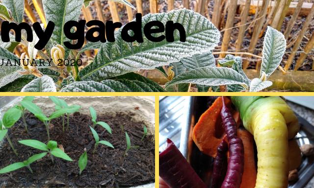 garden-jan-2020-thumbnail