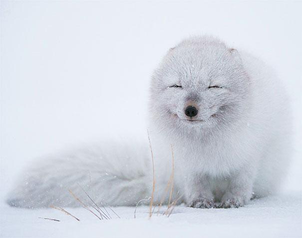 30 фотографий самых счастливых животных на планете-7