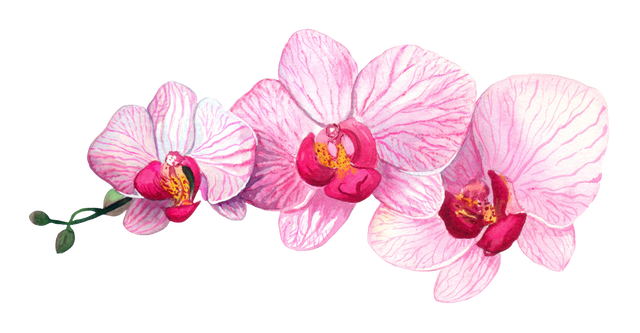 Pink-with-stripes-orchid.png