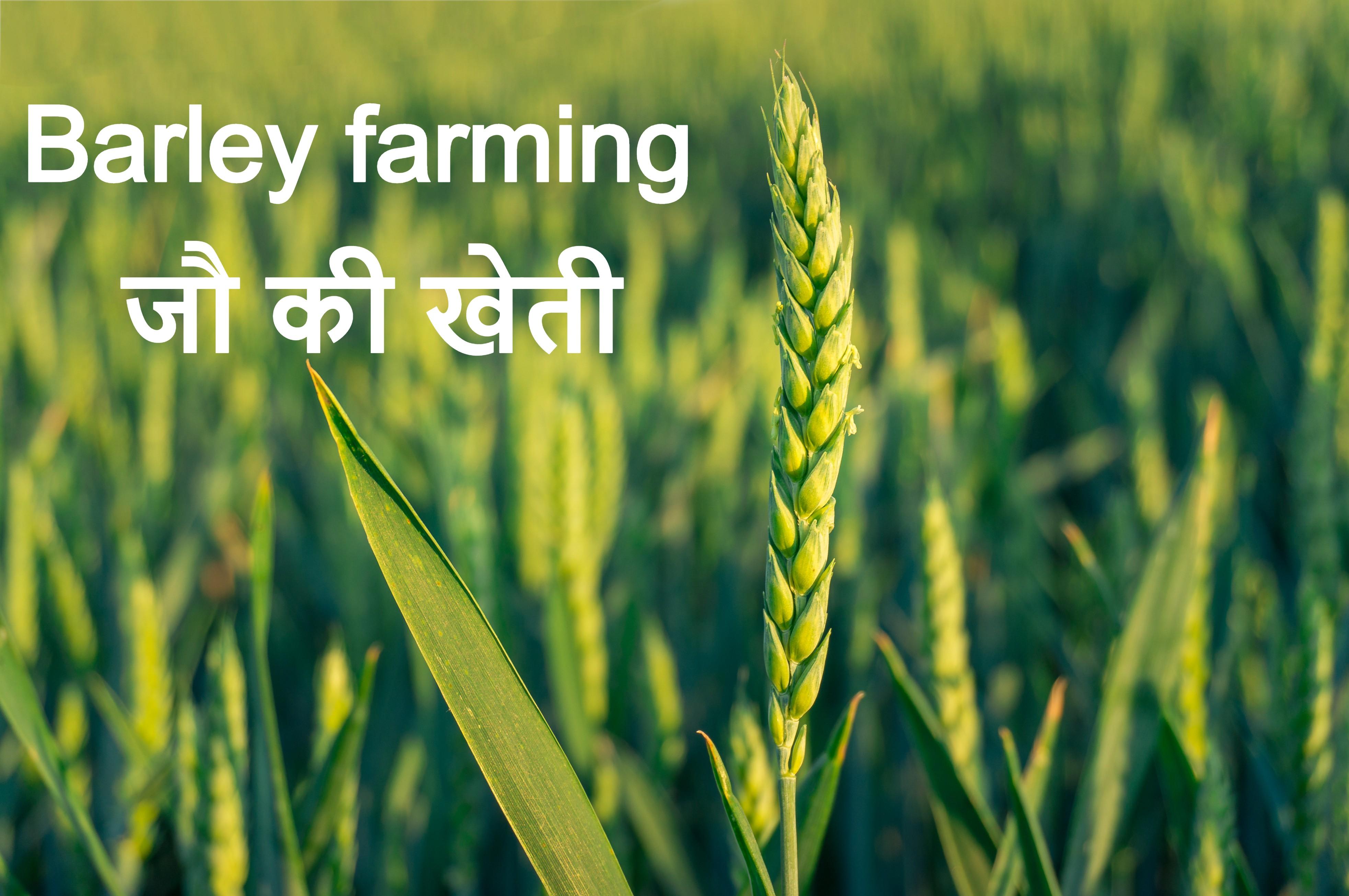 जौ की खेती [Barley farming ]