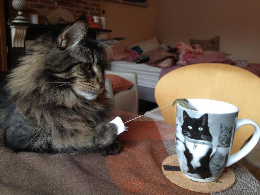 Коты, которых поймали на горячем - 45 отчаянных фотографий - 32
