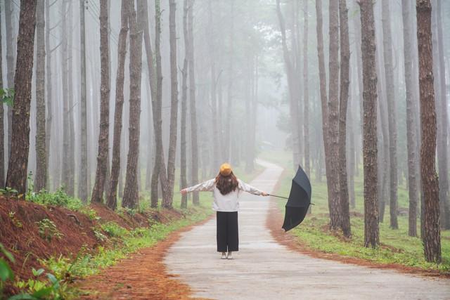 Bo-kaeo-pine-tree-garden-chianfmai
