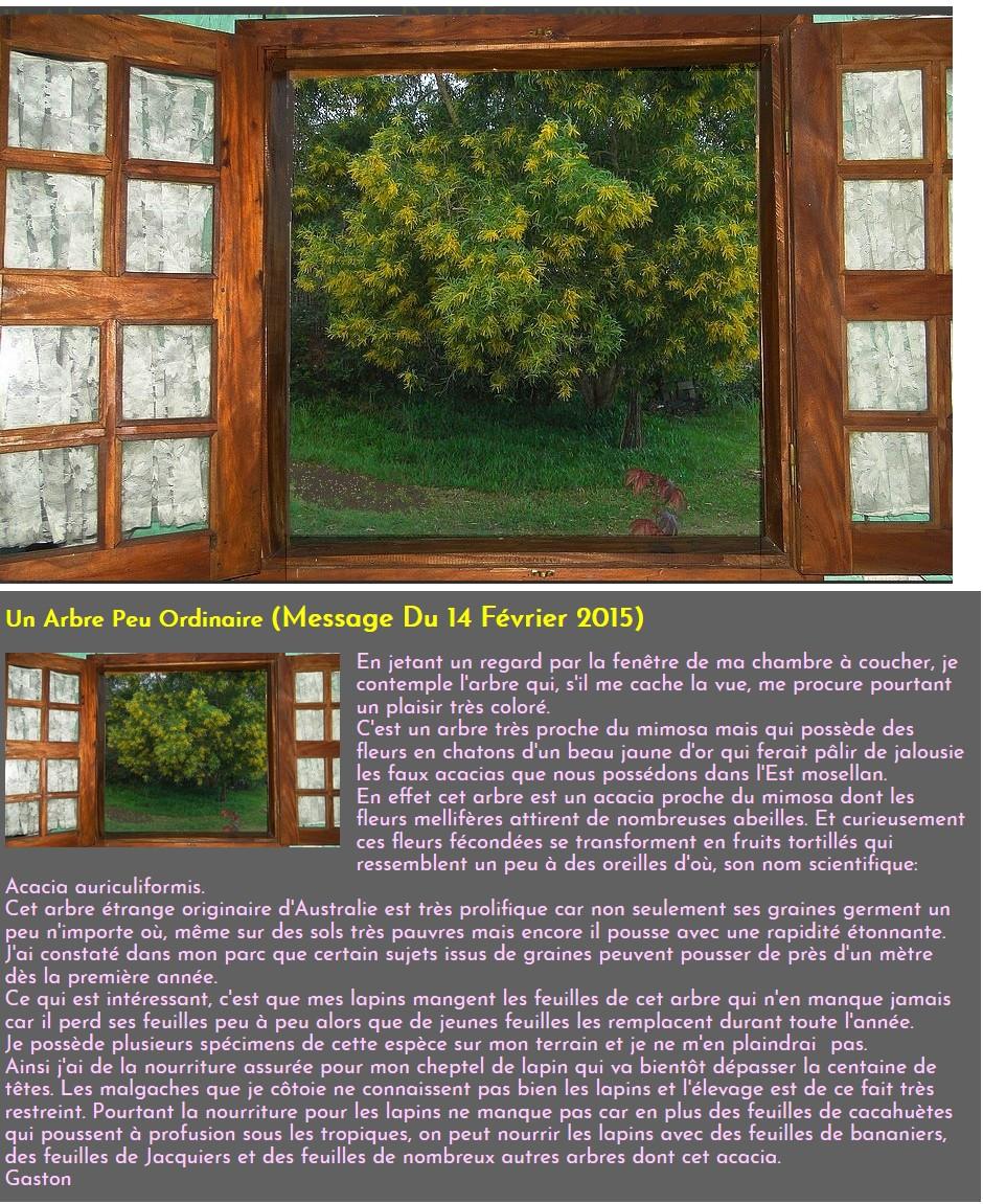 https://i.ibb.co/4Whk6z5/Acacia-auriculiformis.jpg