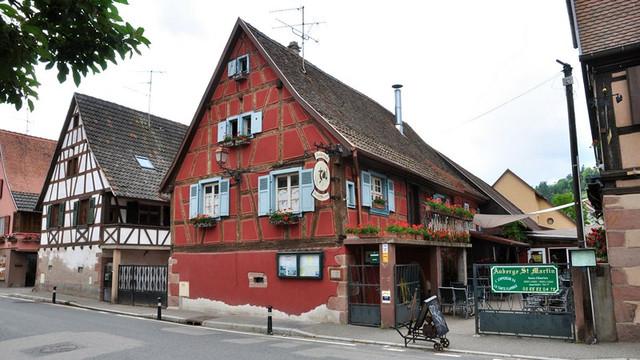 7 Kintzheim vignes Alsace France.jpg