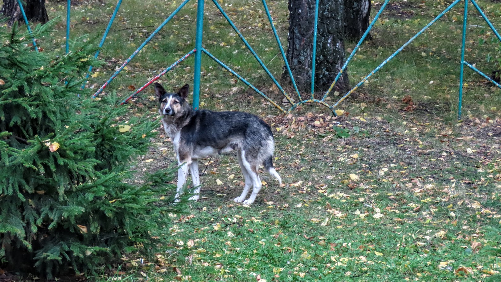 Чайка, шершни и собачки. В Комсомольском парке( 21 фото) 35859963