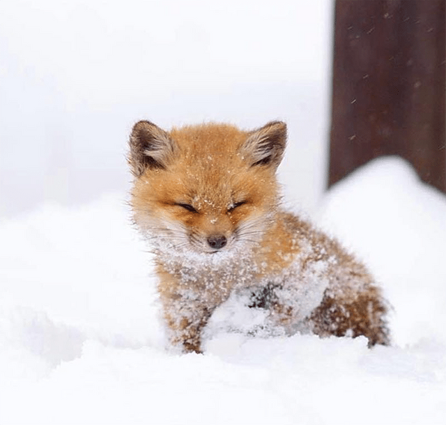 Cute-Baby-Animals-That-Will-Make-You-Go-Aww