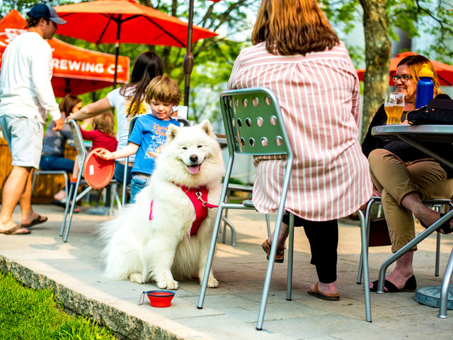 ocb-patio-puppy-1-of-1