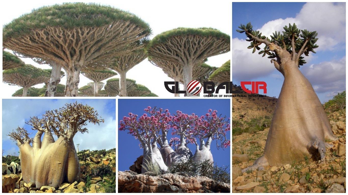 udno-drve-e