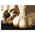 https://i.ibb.co/4mgd2T1/Garlic-Cloves-icon.png