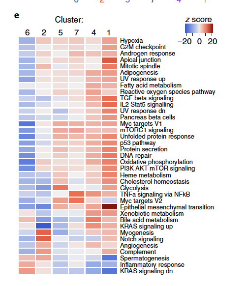 Differences in pathway activities scored per cell by GSVA between the different fibroblast clusters. Shown are t values from a linear model, corrected for the patient of origin.