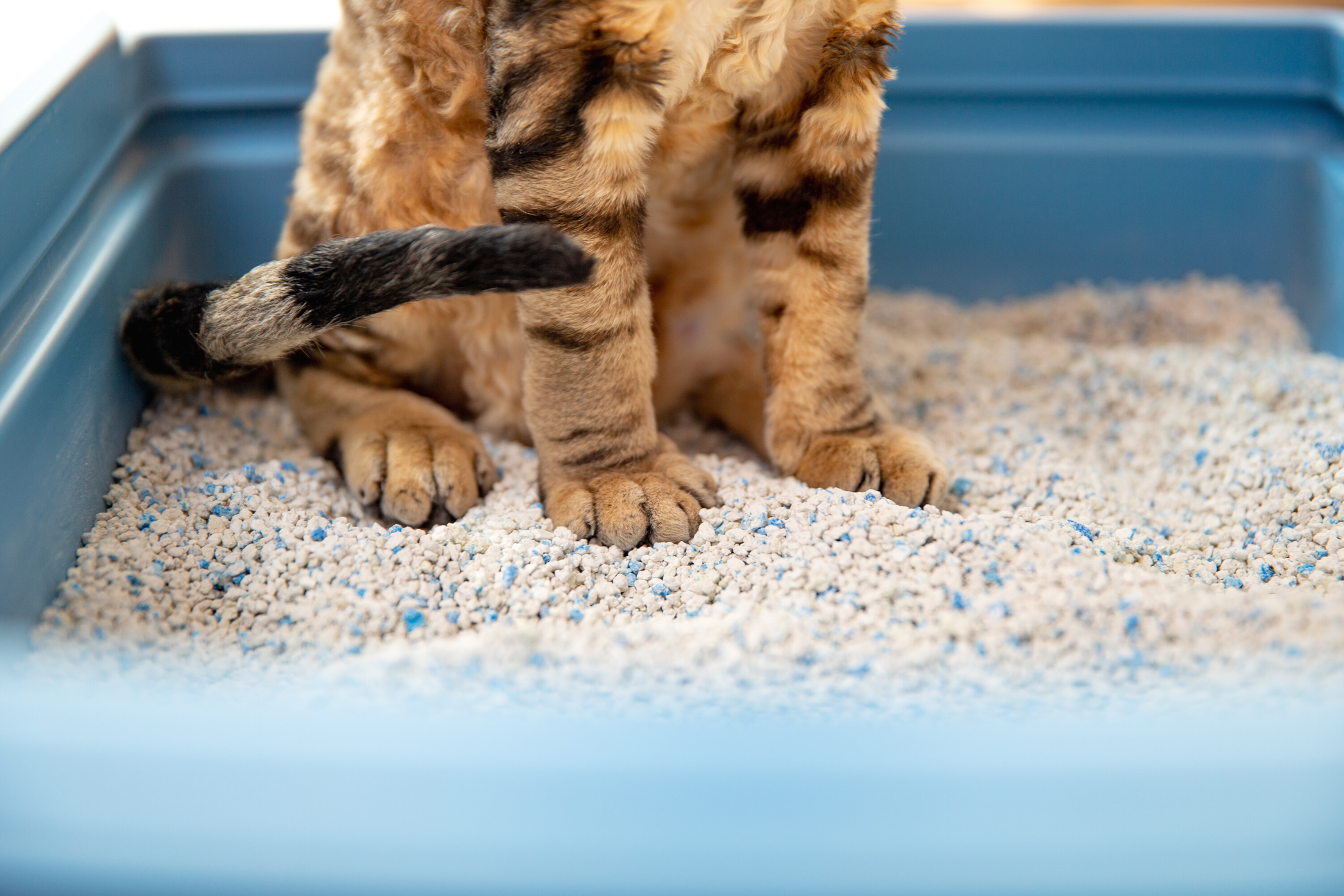 How Safe Is Your Cat's Litter Box?