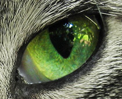 Auge 43344 colors