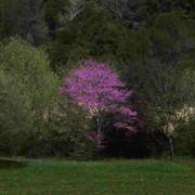 Tree-r-duit1.jpg