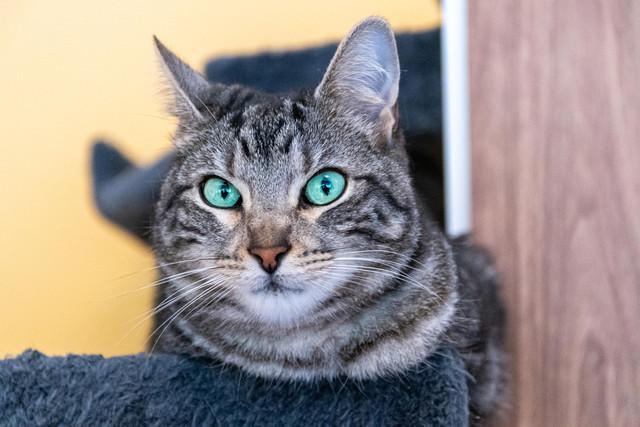Baloo adoptado en Vitoria 012-2019-11-18