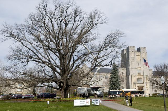 Alwood-Bur-Oak-Tree-Preservation-Service-Project.jpg