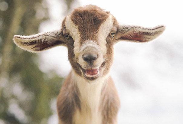 30 фотографий самых счастливых животных на планете-4