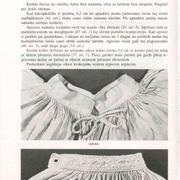 58-lpp