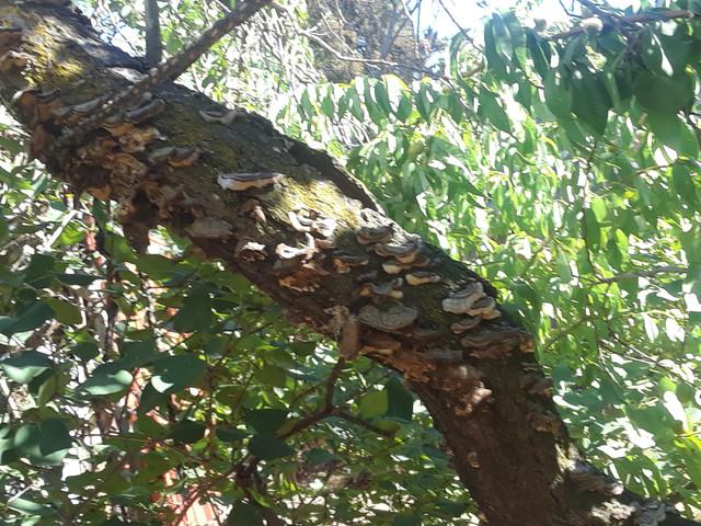 Mushrooms-far