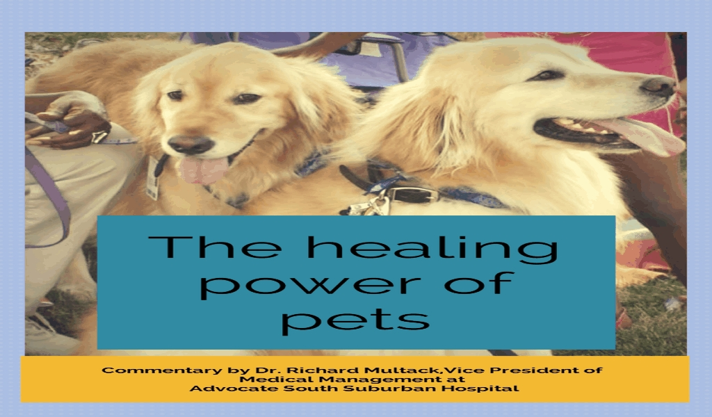 Pet Dog Family Health