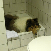 Leo12-Sept-Dusche-2012-09-29-Bamboleo-350x370