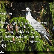 wandelen-Houtduif