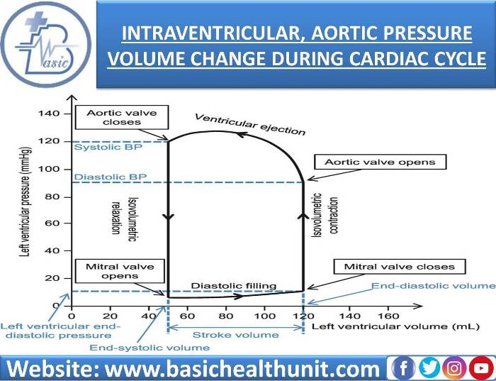 Intra-ventricular, Aortic Pressure & Volume Changes During Cardiac Cycle