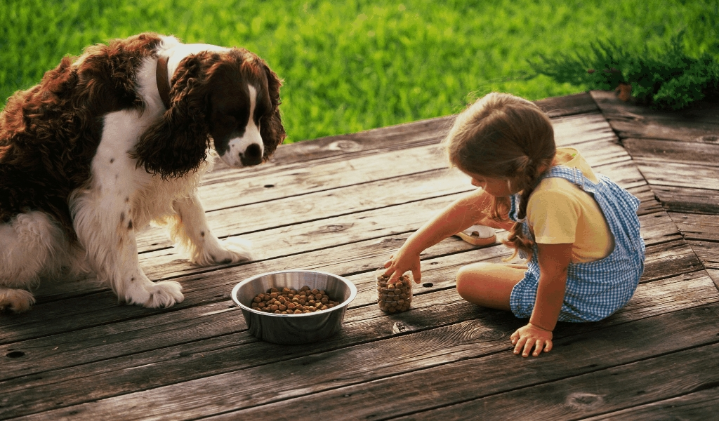 Pet Dog Food World Information