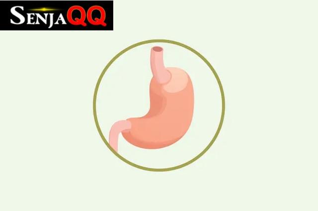 Kenali 4 Fungsi Organ Lambung untuk Tubuh Manusia