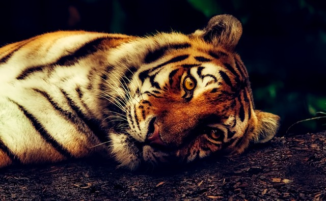 NA MJESTO DOGAĐAJA POSLALI ŠEST PATROLA: Naoružani policajci duže od sat nisu smjeli da priđu plišanom tigru!