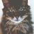 MEDICINE CAT: NEETLEHEART