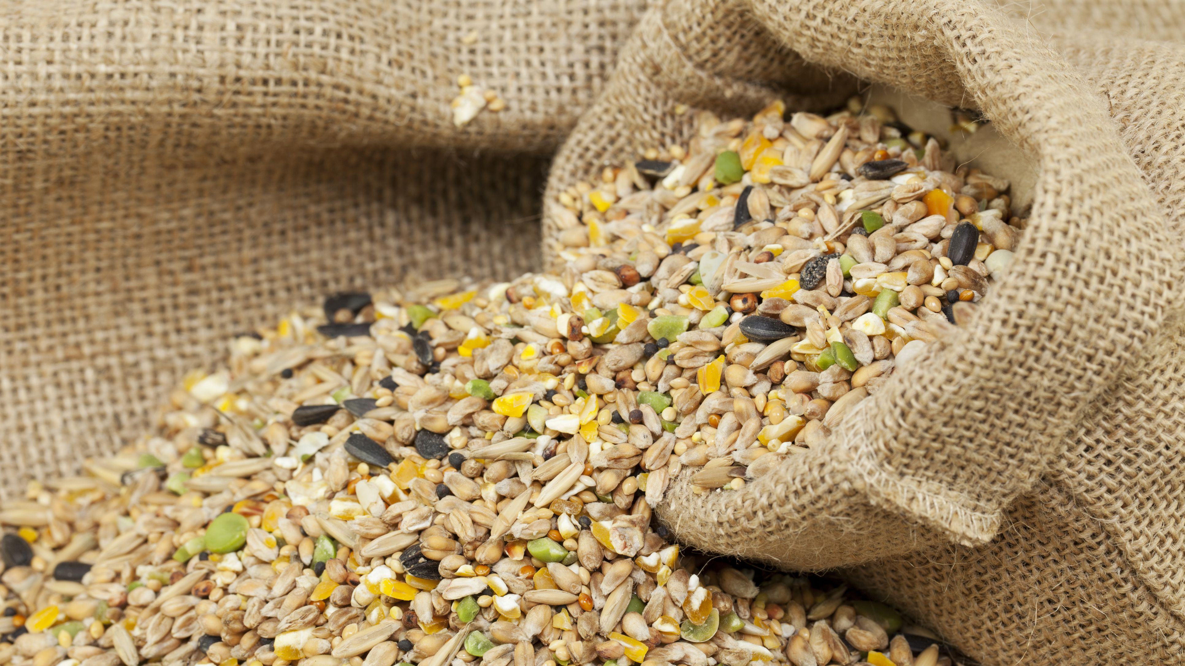 What can I use a bird food?