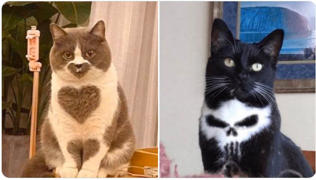 天使貓和惡魔貓 Image