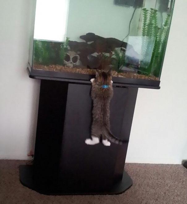 Коты, которых поймали на горячем - 45 отчаянных фотографий - 10