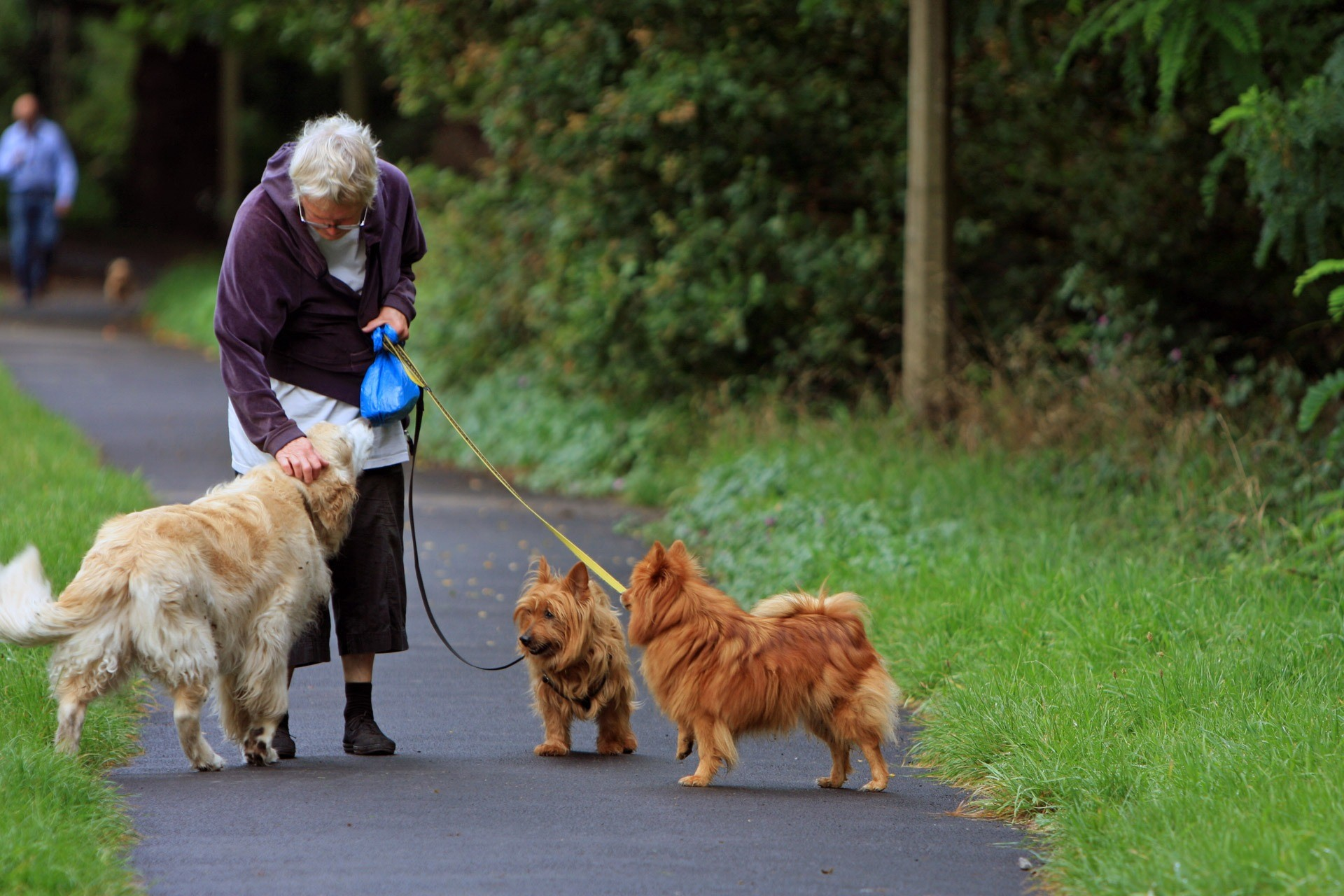 6 Reasons Seniors Should Consider Getting A Golden Retriever