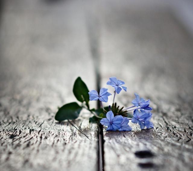 flowers 728256