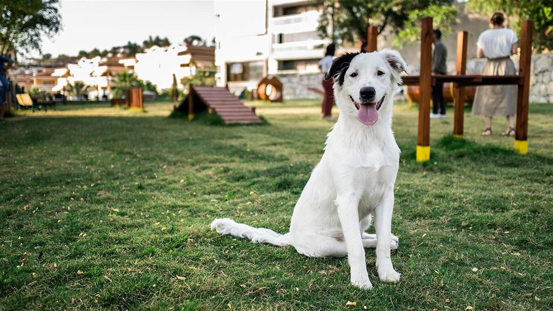Tendencias en los parques para perros en aumento