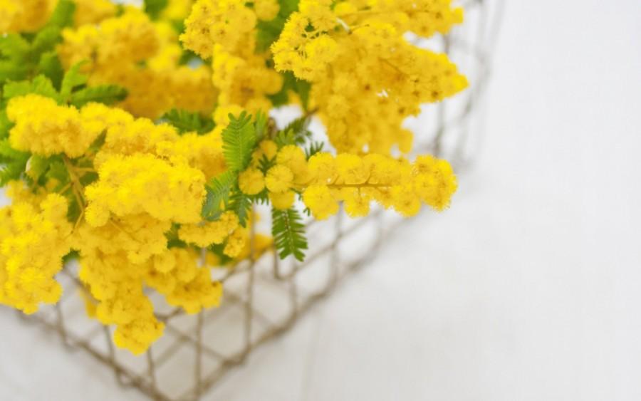 mimozatsvetenievesna-yapfiles-ru