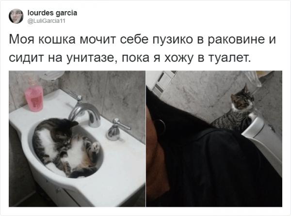 Самые странные существа на планете - это коты