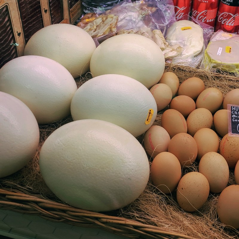 Have you ever tried an ostrich egg? 您尝试过鸵鸟蛋了吗?