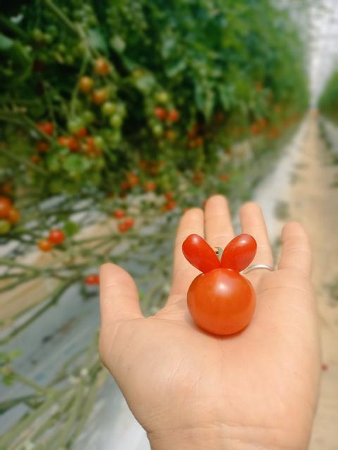 發現可愛的番茄 Image