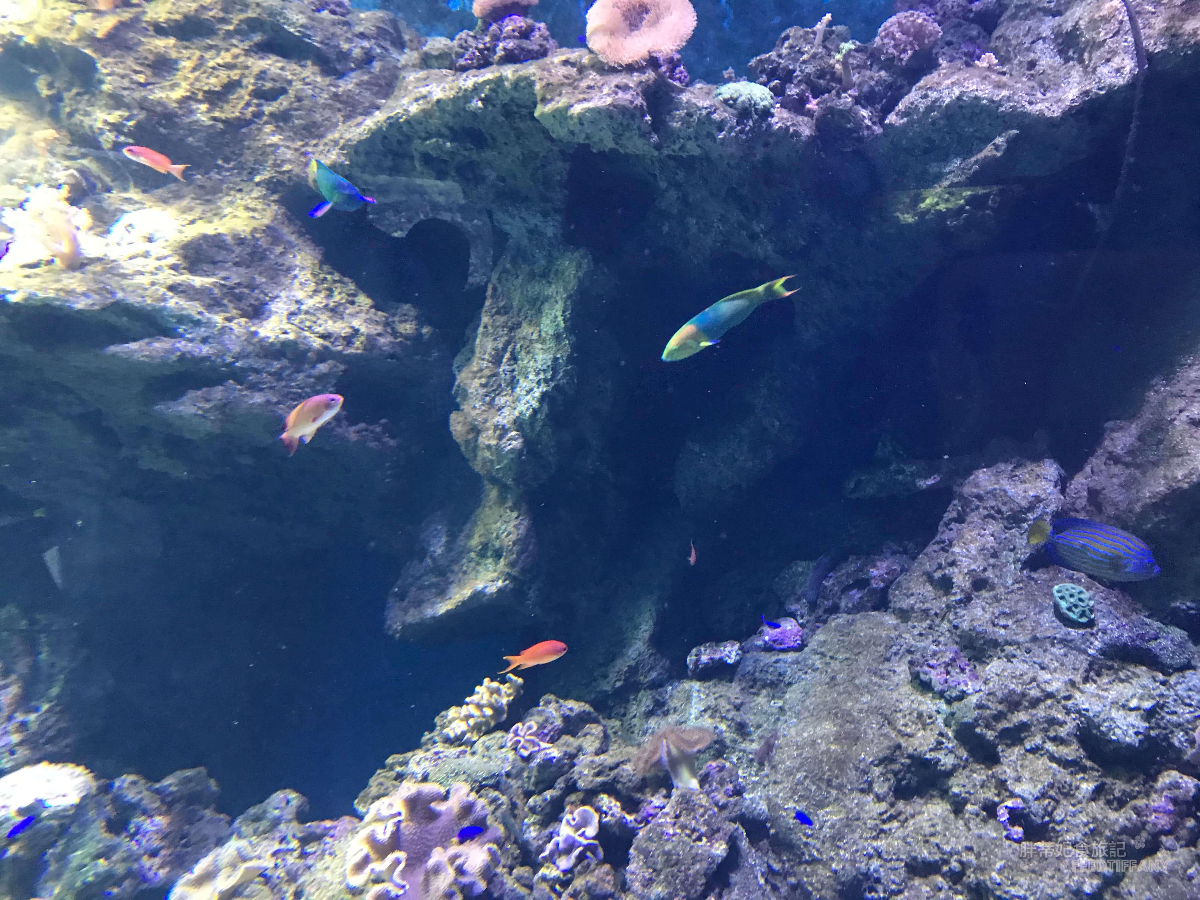 Xpark水族館 喜歡躲在珊瑚裡的魚