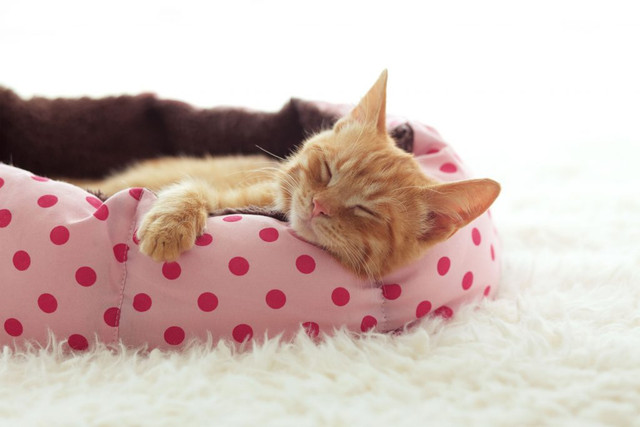 Cat bed: which is the best of 2021?