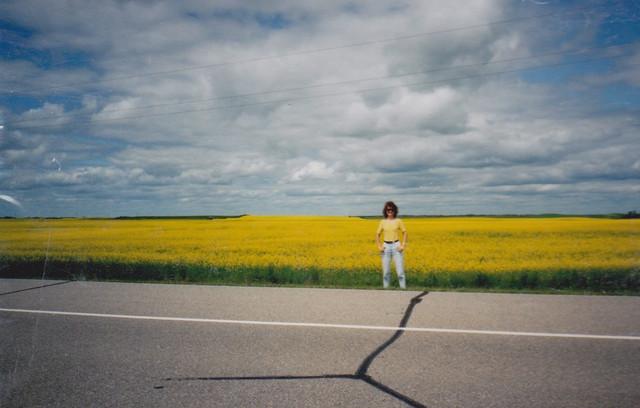 yellowfield.jpg