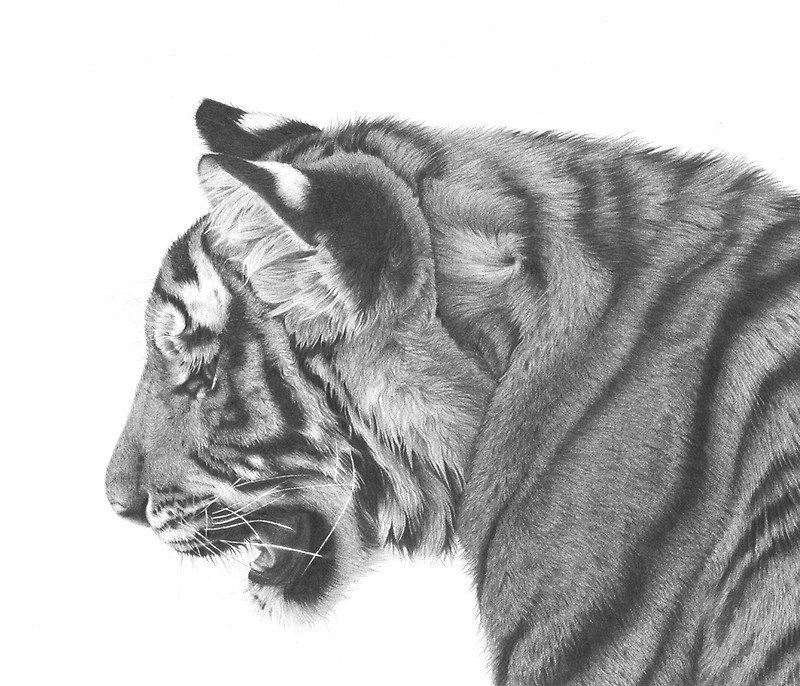 Красота животных в графите