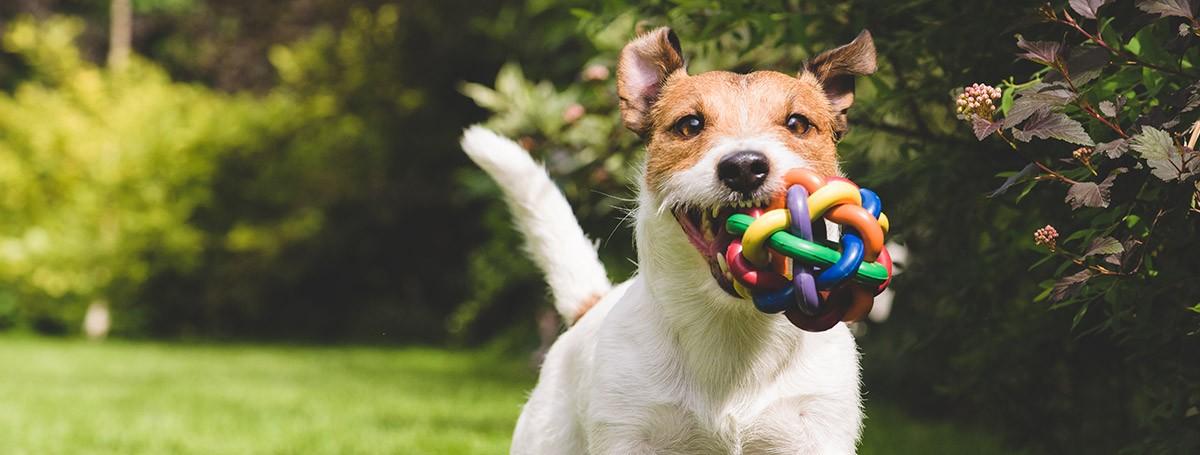 "DOG SAYS ""I LOVE YOU"