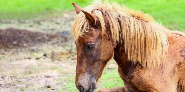 Entwurmung Ihres Pferdes: In welcher Jahreszeit entwurmt?