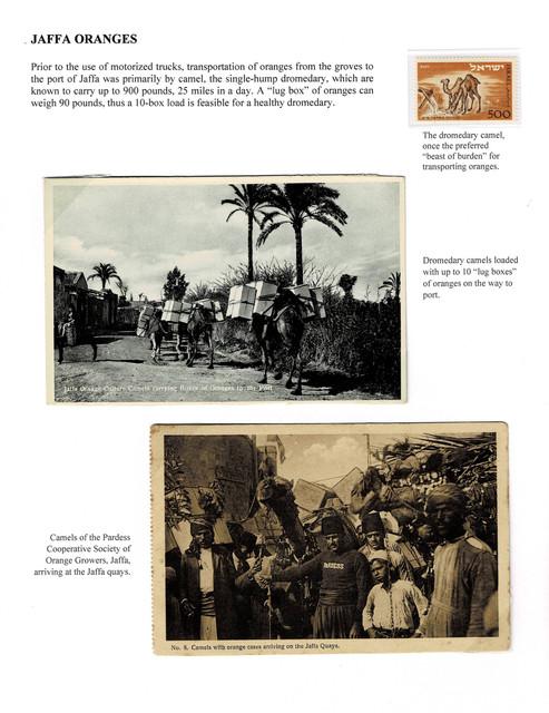 Jaffa-Camel-Transport