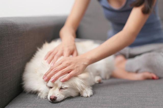 Langkah Sederhana untuk Membersihkan Bulu Anjing yang Menempel pada Furnitur Rumah