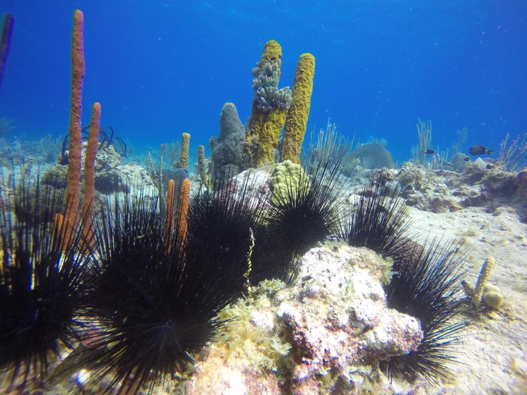 Finger Coral Plantation